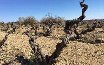 ¿Qué hace diferente al vino español?